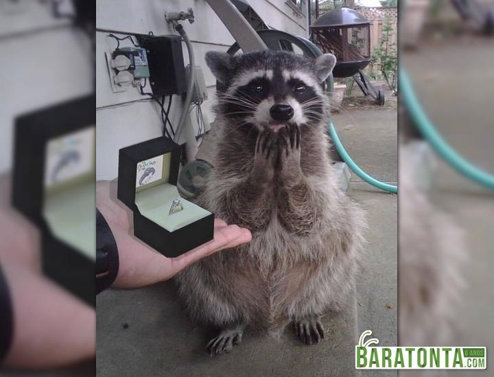 Ela disse sim