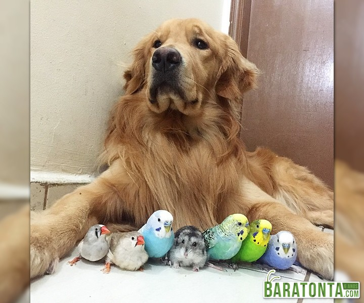 Ela adotou passarinhos depois de perder seus 2 filhotes