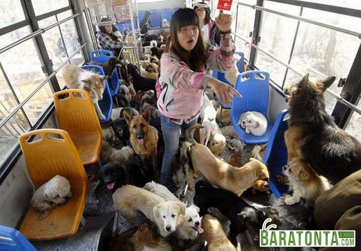 10 fatos que provam que a Ásia é muito mais absurda do que você imagina