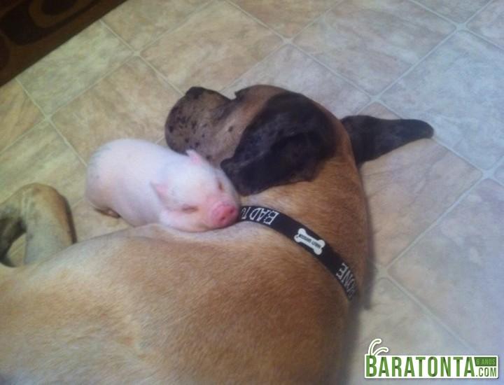 O cão não estava dormindo, mas ficou parado para não acordar o filhote!