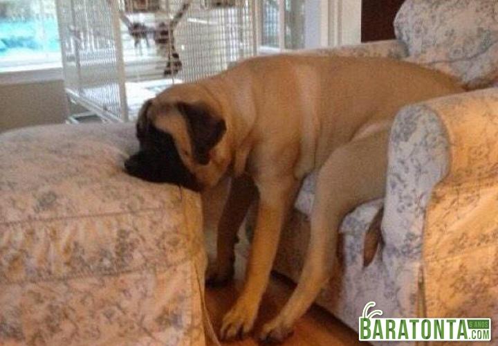 Quando tem que acordar cedo de final de semana
