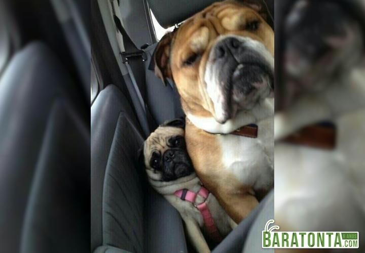 Quando tem muita gente no carro e você tem que se apertar