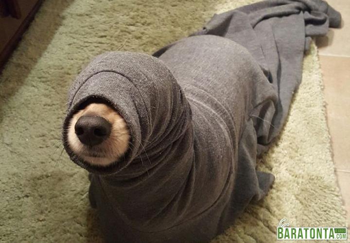 É uma foca?