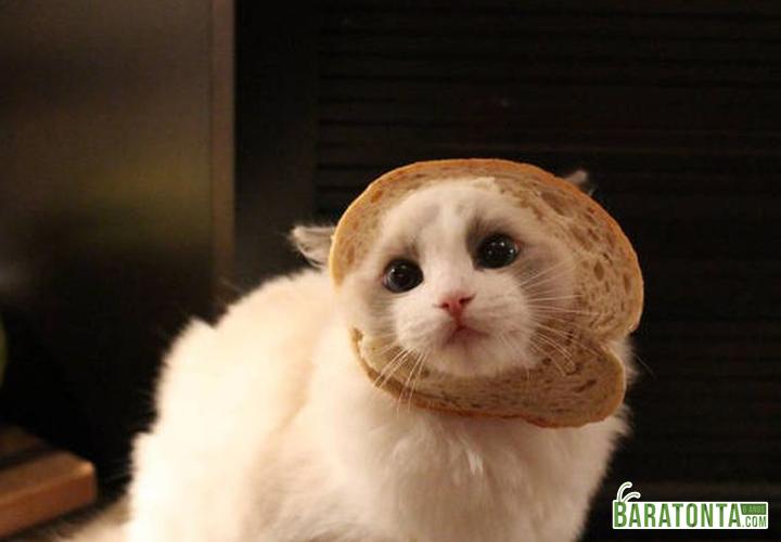 Olha o que o gato fez